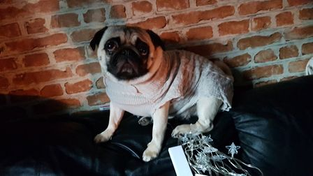 The Wrights' two dogs have had to wear sweaters in their Stowmarket home Picture: RACHEL EDGE