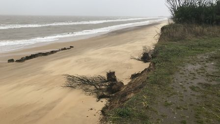 Trees have fallen on to the beach at Easton Bavents near Southwold as the coastline continues to ero