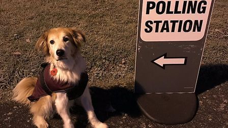 Bailey was up bright and early to go to the polling station. Picture: KAREN RHODES/LUXURY DOG HAMPER