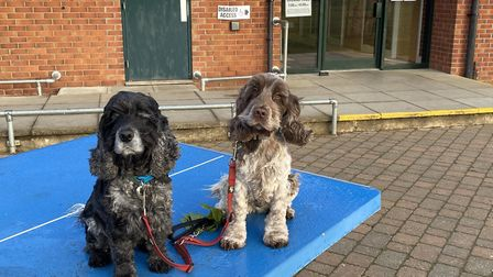 Hunter and mum Saffy are pictured at a polling station in the Bury St Edmunds area Picture: DERMOT O