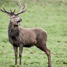 Deer coursing and poaching remains a problem in Suffolk Picture: BEN BIRCHALL/PA ARCHIVE/PA IMAGES