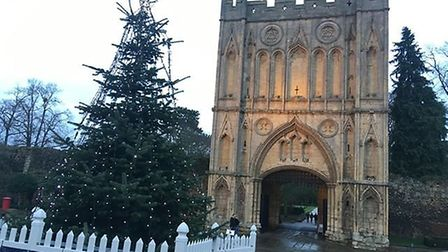 The Christmas tree in Angel Hill, Bury St Edmunds Picture: RACHEL EDGE