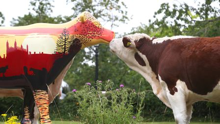 Cows About Cambridge will be taking place in spring 2020 Picture: RICHARD MARSHAM/RMG PHOTOGRAPHY