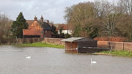 Duncan Brodie captured these fantastic photos between Layham and Hadleigh, even spottign two swans o