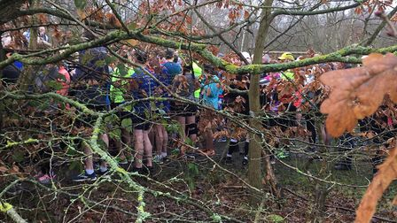 Through the trees: a record number of 781 runners and walkers congregate before the start of the Sho
