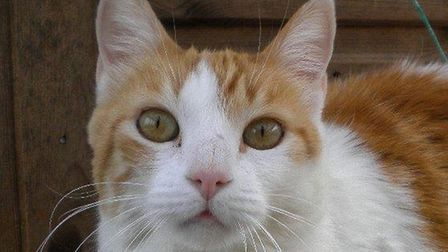 Polly is currently being cared for at the Framiligham and Saxmundham branch of Cats Protection - but