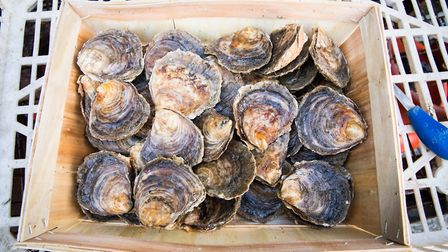 Native oysters in a basket Picture: ZSL
