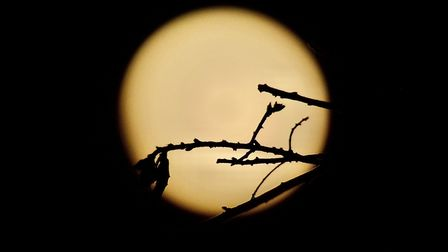 Steven Bailey's picture of the wolf moon