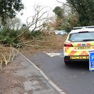 A tree was felled by the wind in Kesgrave Picture: CHARLOTTE BOND