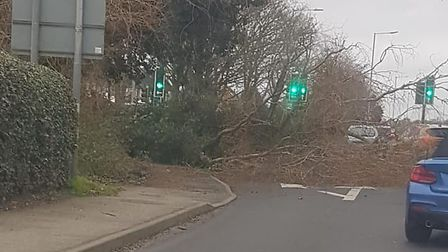 Storm Ciara brought down a large tree on the main road in Kesgrave Picture: DANNY HEWITT