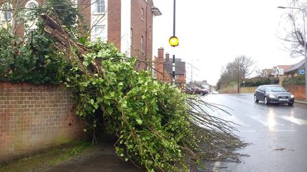 A tree blocking the path in Anglesea Road Ipswich Picture: DAN BUCKLE
