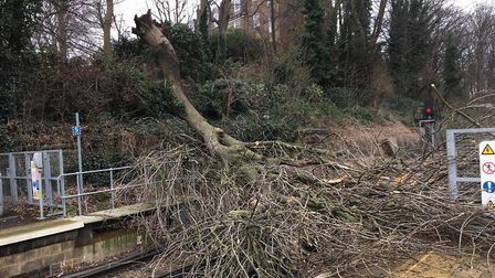 Trees strewn across railway lines in East Anglia due to Storm Ciara Picture: NETWORK RAIL