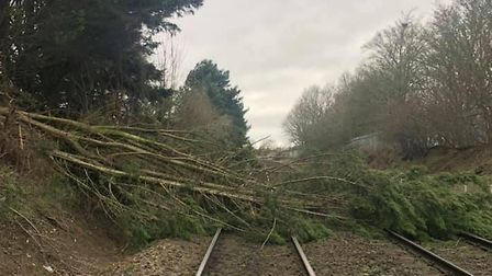 A tree blocked the line near Bury St Edmunds on Sunday. Picture: NETWORK RAIL