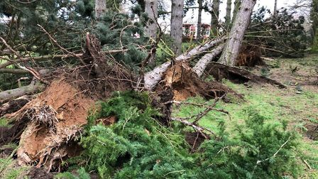 Storm Ciara caused six trees fall in one woman's garden in Bury St Edmunds, Suffolk - and Storm Denn