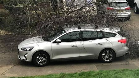A tree landed on a car in Shenstone Drive, Ipswich Picture: SOPHIA JACKSON