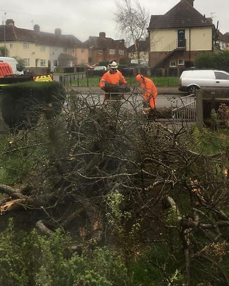 Clearing up a fallen tree in Lindbergh Road, Ipswich Picture: CAROL BROWN