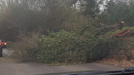 A tree came down on Sunday at Debenham near the Mickfield turn-off before the Low Road turn-off. Pic