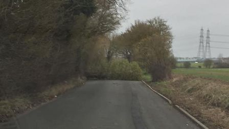 A tree diown in Westerfield yesterday, between Henley Road and Westerfield crossroads Picture: KEI K