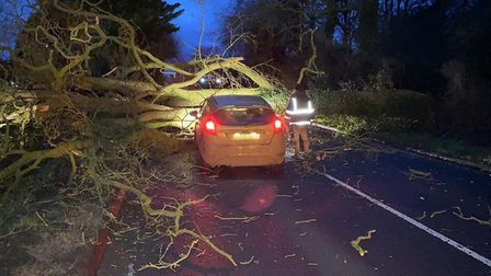 A tree fell onto the A146 connecting Lowestoft to Norwich. Picture: SUFFOLK CONSTABULARY