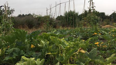 A number of allotments and sheds have been broken into across Suffolk. Picture: ARCHANT