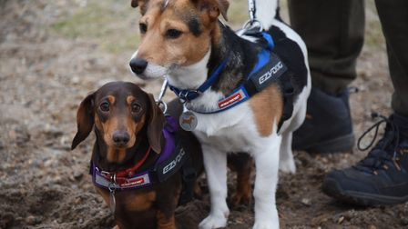 Violet, three, and her Jack Russell friend, Chip, four, at the Southwold Sausage Dog Walk. Picture:
