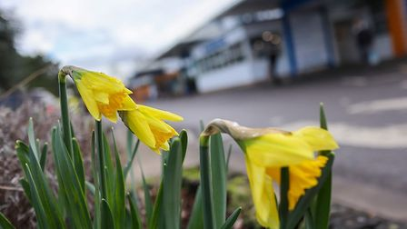 Signs of spring at West Suffolk Hospital in Bury St Edmunds. Picture: WEST SUFFOLK HOSPITAL