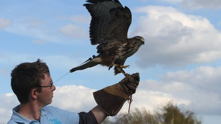 East Anglian Game and Country Fair: Falconry
