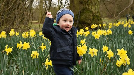 Spring has sprung in Nowton park, Bury Picture: CHARLOTTE BOND