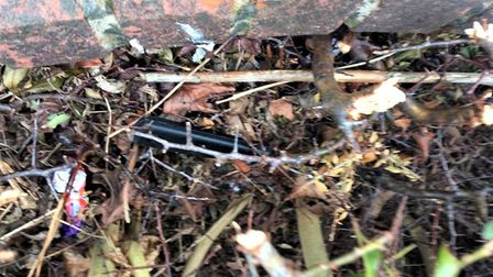 The knife, hidden amongst hedgerow with the handle barely visible, found by nursery children and wor