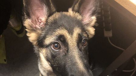 Poppy was returned to her owners on Saturday evening Picture: SUFFOLK POLICE
