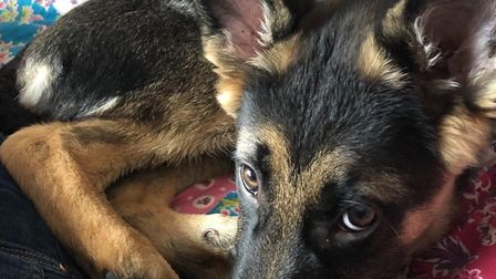 Poppy was taken from Onehouse Picture: SUFFOLK CONSTABULARY