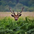 A deer captured on camera Picture: LILLY VIOLET ADAMS