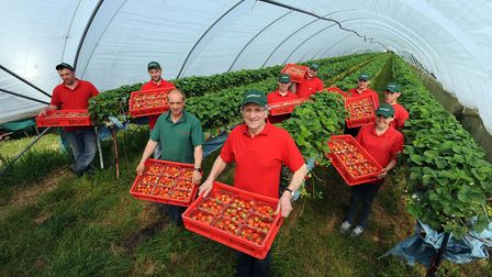 Andrew Sturgeon and team with an early crop of strawberries Picture: PHIL MORLEY