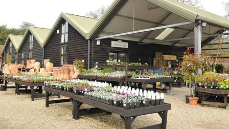 The Place for Plants in East Bergholt.