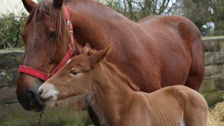 Coppermantle Big Stig and his mother Faith Picture: STEFF EVANS
