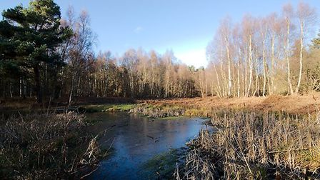 Rendlesham Forest offers three walks for families - Picture: TIM DENNEY