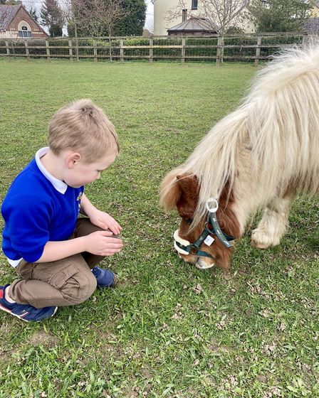 Noah Cleaver, aged five, is reunited with Paddington the Shetland pony. Picture: NICKY CLEAVER