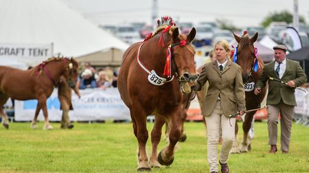 This year's Hadleigh Show has been cancelled. Suffolk Punches and heavy horses at last year's show.
