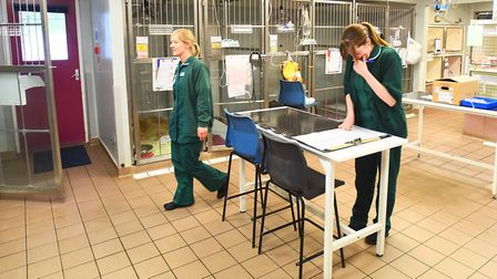 The Suffolk-based charity has worked to help millions of animals Picture: ARCHANT