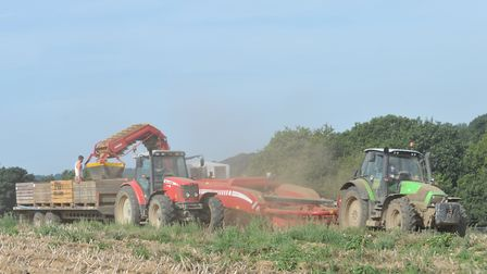 Farmworkers busy with an earlier harvest at Home Farm Nacton Picture: SARAH LUCY BROWN
