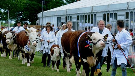 The grand parade at the Suffolk Show Picture: SUFFOLK AGRICULTURAL ASSOCIATION