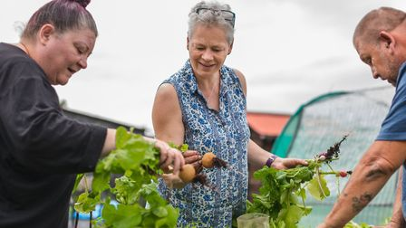 Sarah Manton-Roseblade, centre, with other gardeners on one of the Suffolk Mind allotments before lo