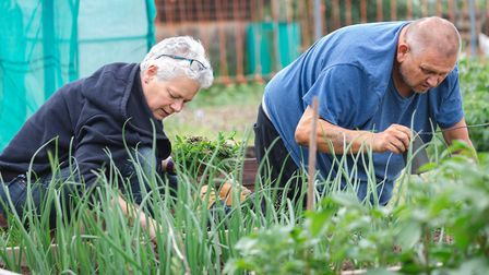 Gardening on one of Suffolk Mind's allotment projects before lockdown Picture: SUFFOLK MIND