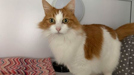 Would you like to adopt Bisley? PICTURE: Martlesham Animal Home