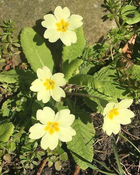 Flowers in the Rosary Cemetery at Thorpe Hamle. Picture: CAROLINE CLARKE