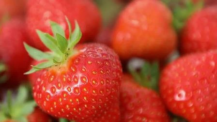 The strawberry crop at D C Williamson at Bradfield, near Manningtree Picture: D C WILLIAMSON