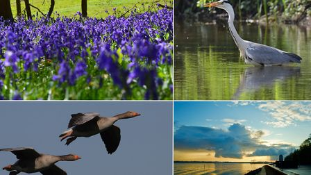 Reader pictures taken on daily walks in lockdown of the stunning Suffolk landscape and its wildlife.