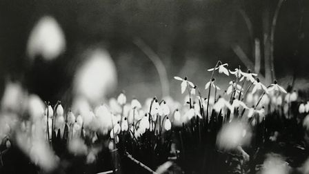Setting up a home darkroom is one of Claire Sargent's lockdown hobbies, and this is one of her photo