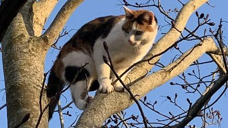 Sarah Gallagher's cat got high up a tree and couldn't get down - but managed it in the end! Picture:
