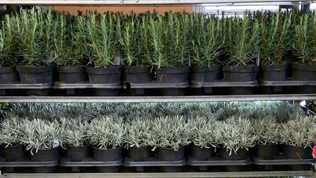 Just some of the potted plants available at the new gardening centre PICTURE: The Potting Shed